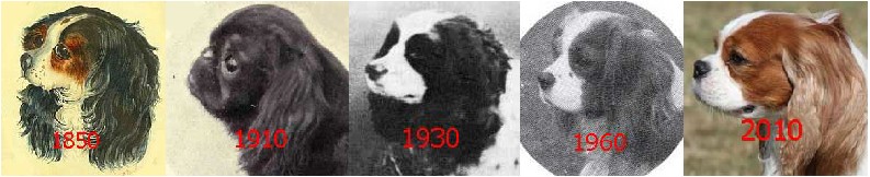 Accordion-Muzzled Spaniels 1850-22010