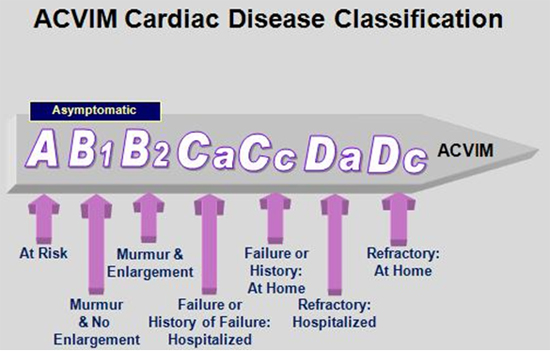 ACVIM Consensus Stages of MVD