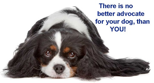 Be Your Dog's Advocate!