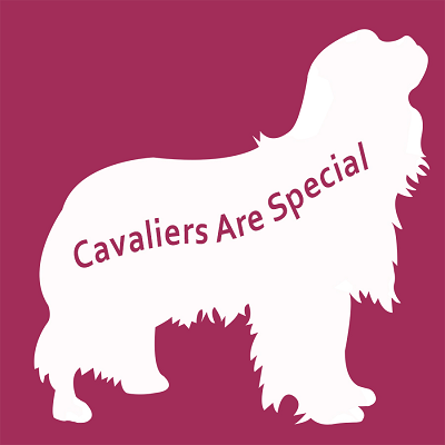 Cavaliers Are Special