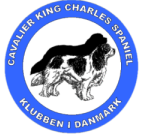Danish Cavalier King Charles Spaniel Club