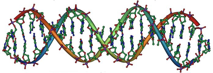 Mutazione di un gene nel DNA è la causa della Sindrome da caduta episodica. Nell'immagine molecola di DNA