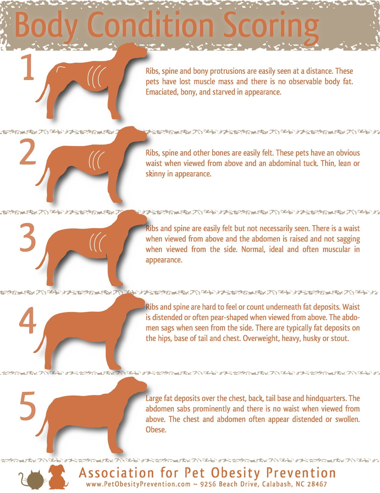 5 Point Dog Body Condition Scoring Chart