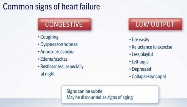 Clinical Signs of Heart Failure from MVD