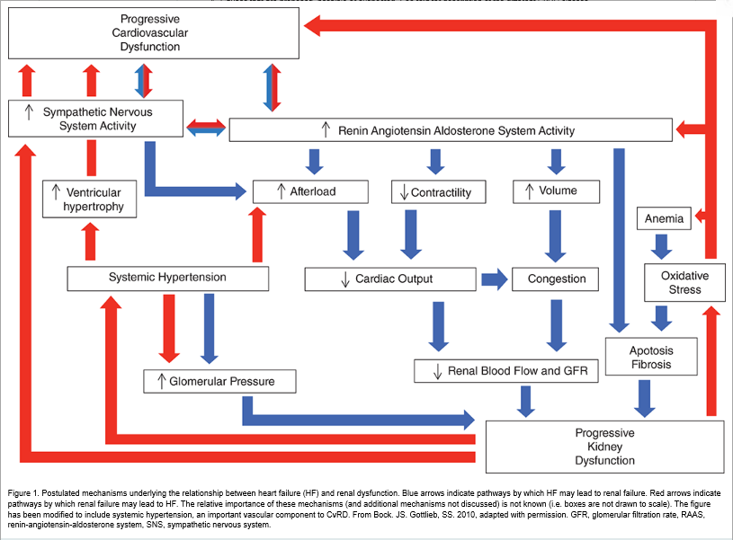 Pathways Between Heart Failure And Renal Dysfunction