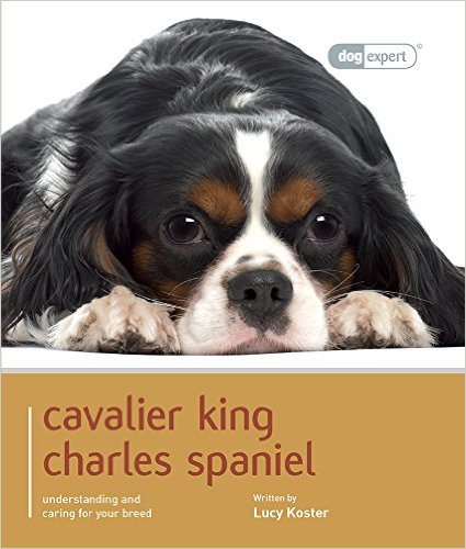 Cavalier King Charles Spaniel by Lucy Koster