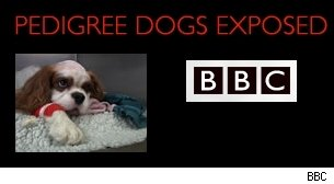 BBC's Pedigree Dogs Exposed