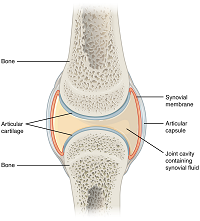 Mri small bowel study endoscopy