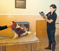 Thermo-imaging of cavalier King Charles spaniel