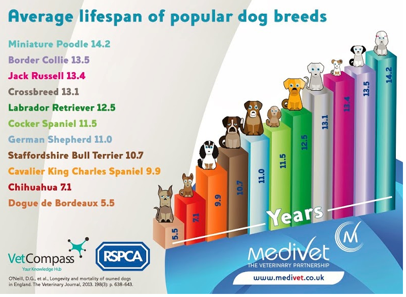 Purebred Breed Average Lifespans Study Report